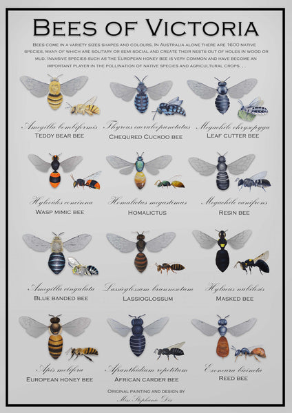 Bees of Victoria