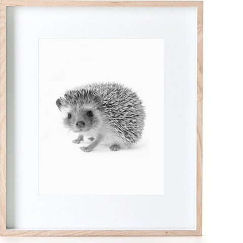 Photographic Hedgehog Print