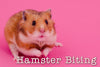 Ouch, Hamster! You Bit Me. How Can I Help You Stop?!