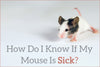 How Do I Know If My Mouse is Sick?