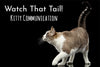 Kitty Communication: What's Your Cat Trying To Tell You?