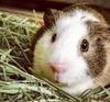 2nd Cut Timothy + Bedding, Small Animal Food:Smallpetselect