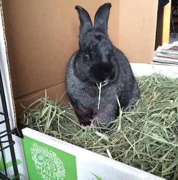 2nd Cutting Timothy Hay, :Smallpetselect