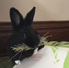 3rd Cut Timothy + Bedding, Small Animal Food:Smallpetselect