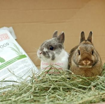 3rd Cut Timothy + Rabbit Food Pellets, :Smallpetselect