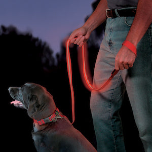 NiteDawg LED Safety Leash, dog collars and leashes:Smallpetselect