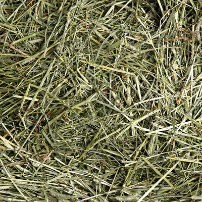 1st Cutting Timothy Hay, Hay:Smallpetselect