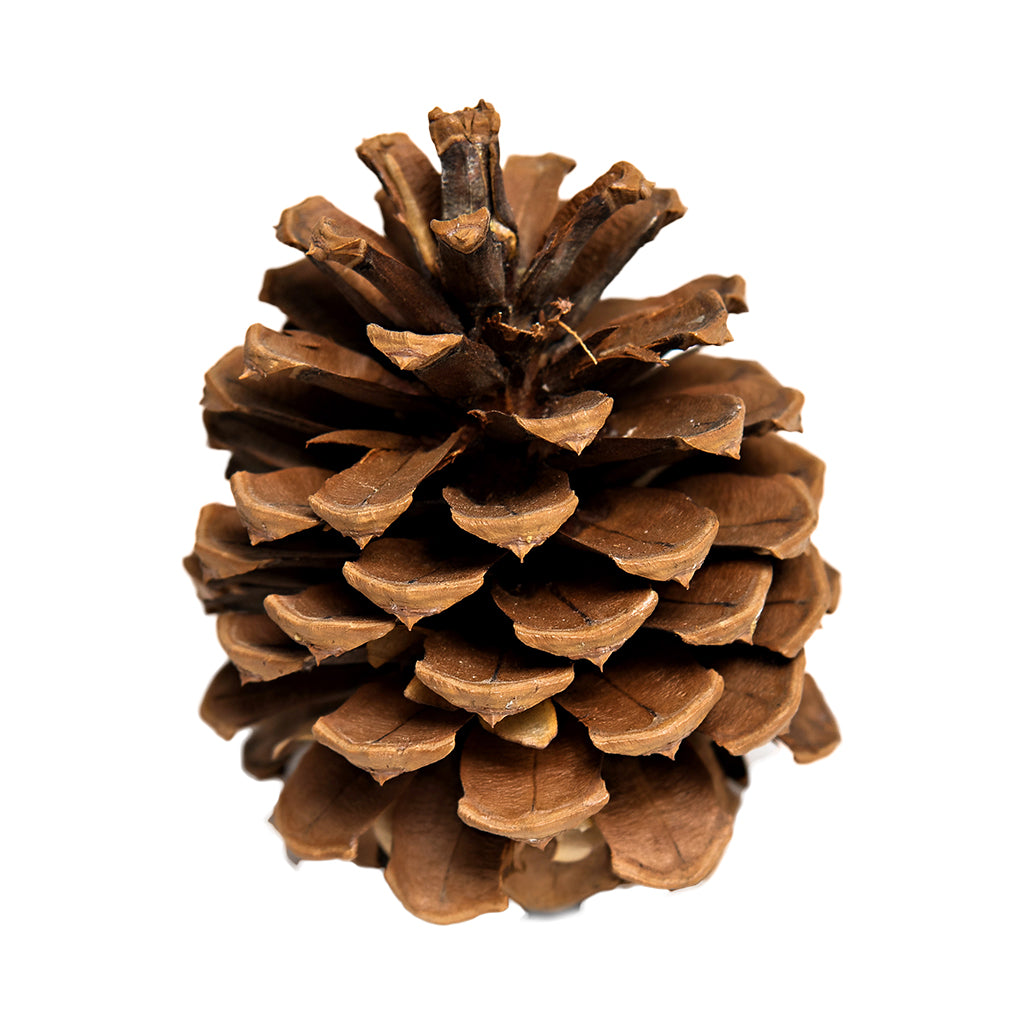 Totally Natural Pinecone
