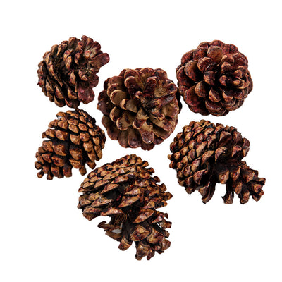 Fancy Fruited Pine Cone Chews, toys:Smallpetselect