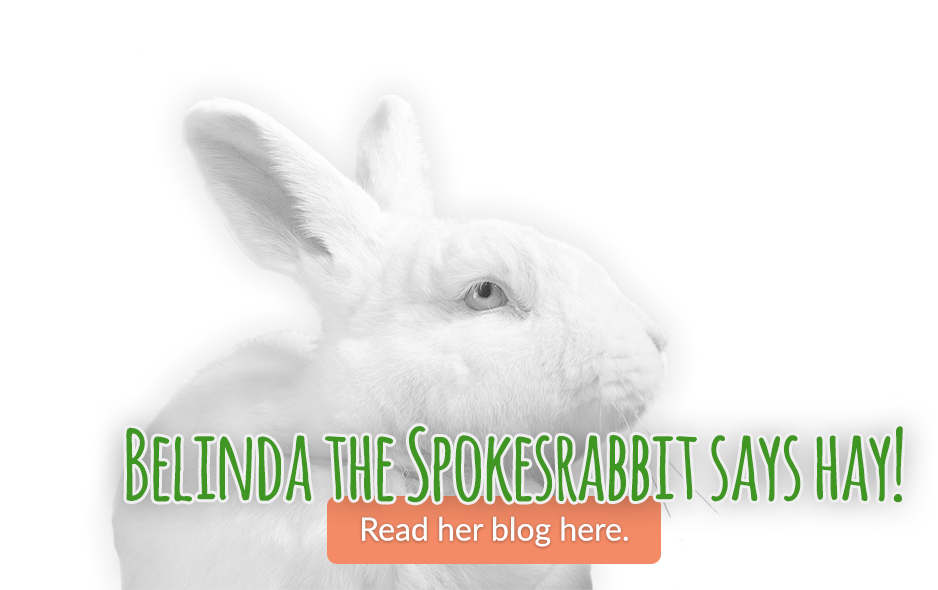 Belinda the Spokesrabbit says Hay! Read her blog here.