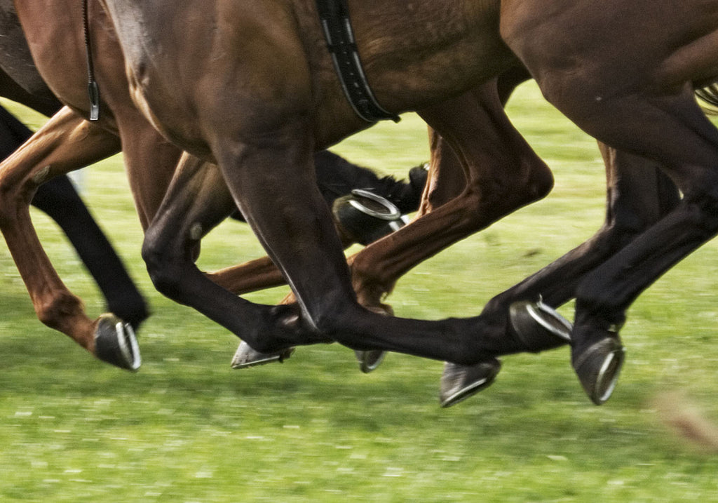 Joints, tendons and muscles care for horses