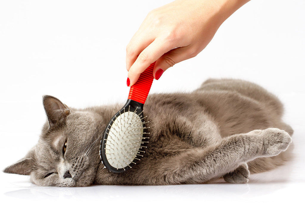 Fur, skin and nails care for cats