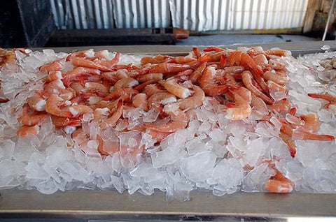 Florida White Shrimp - 1 lb.