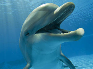 Dolphins and Recreational Drug Use