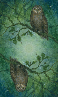 Forest of Enchantment Tarot - Tarot Kit