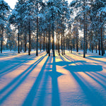 Zen Large Puzzle - Sunrise in a Winter Forest
