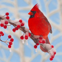 Zen Medium Puzzle - Winter Cardinal