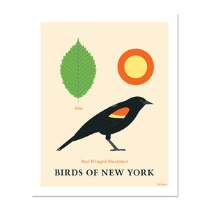 Red-Winged Blackbird - Birds of New York