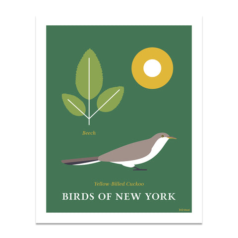 Yellow Billed Cuckoo - Birds of New York