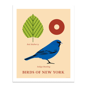 Indigo Bunting - Birds of New York