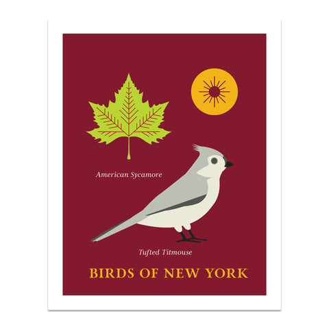 Tufted Titmouse - Birds of New York