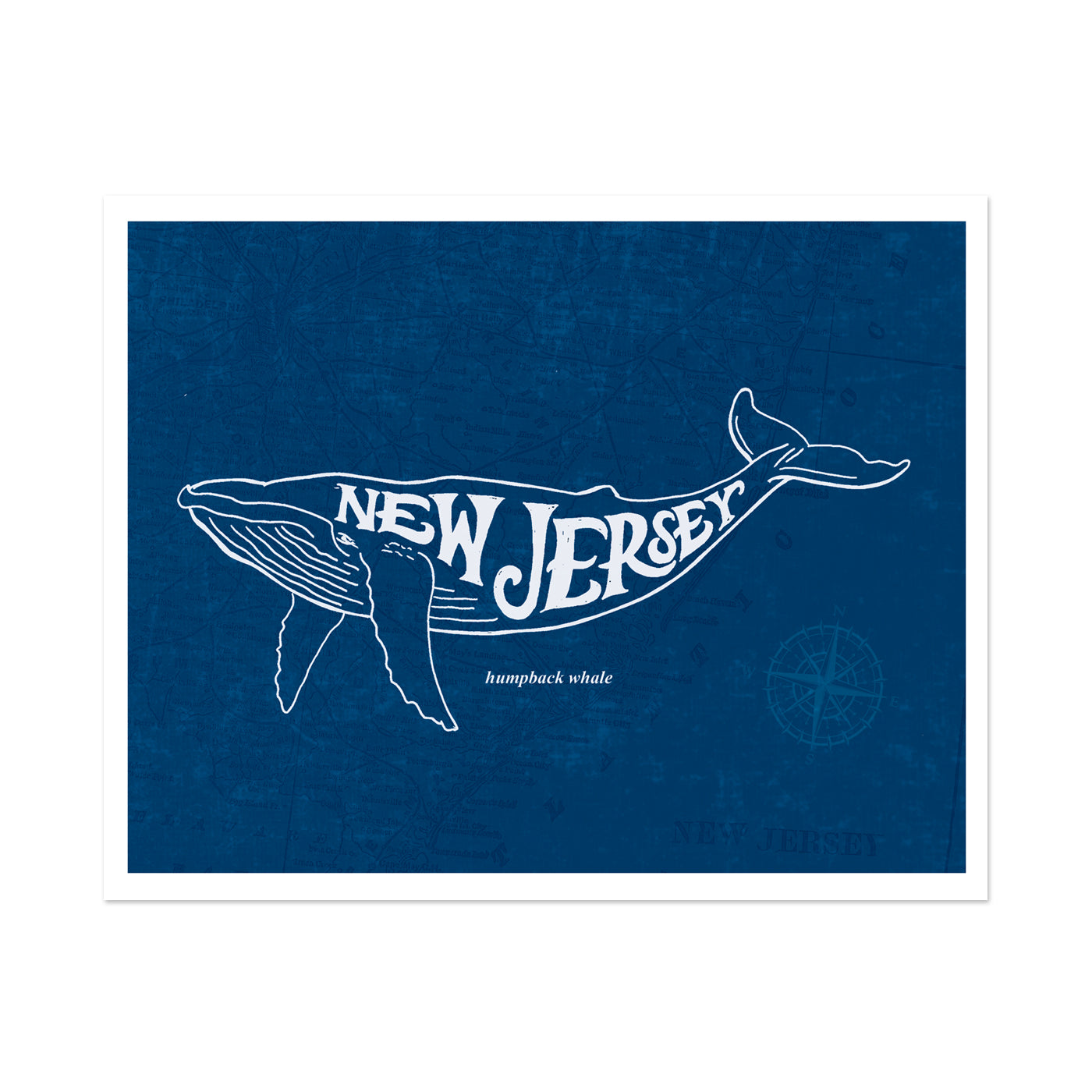 New Jersey Humpback Whale