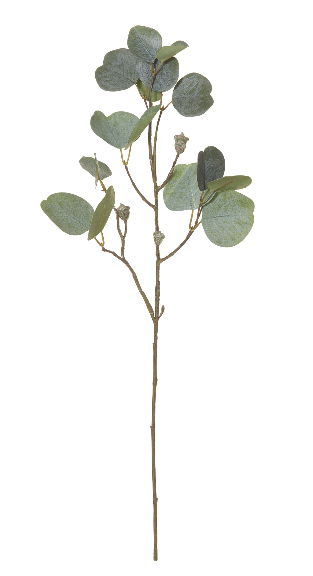 Eucalyptus Pod Spray