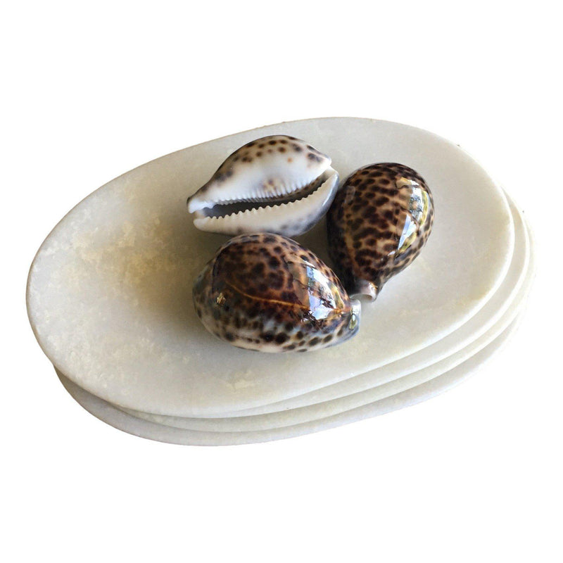 Sea Shell Spotted Cowrie Shells Tiger Shell Hamptons Beach Natural Nautical Set of 3-Janggalay