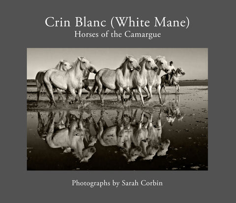 Crin Blanc (White Mane):  Horses of the Camargue - Hardcover - 2017