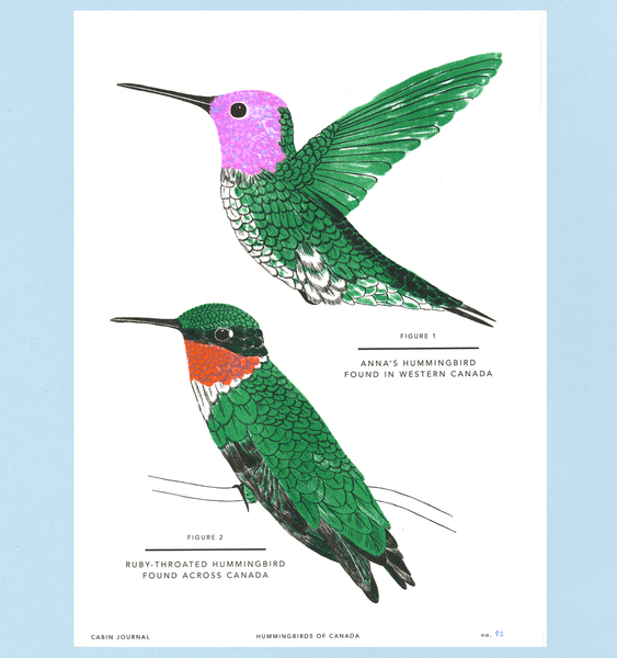 CANADIAN HUMMINGBIRDS ART PRINT