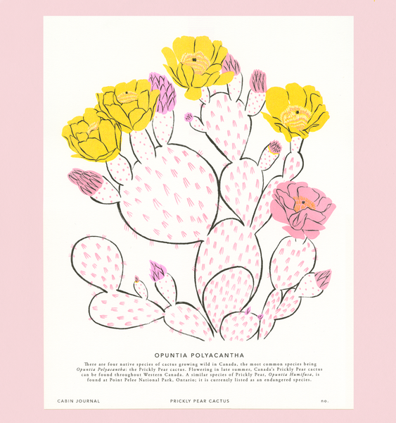 CANADIAN PRICKLY PEAR ART PRINT