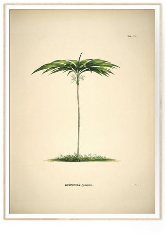 Botanical palm print #3506