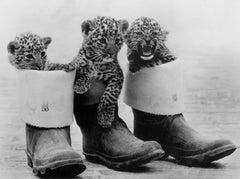 Three Baby Leopards, Bridgeman Images Alternate View