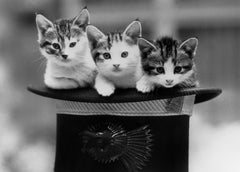 Three Kittens in A Hat, Bridgeman Images Alternate View