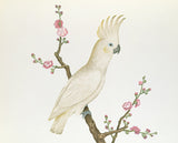 Lesser Lemon Crested Cockatoo perched on a sprig of flowering Japonica, Chinese School, Qing Dynasty (1644-1912)