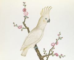 Lesser Lemon Crested Cockatoo perched on a sprig of flowering Japonica, Chinese School, Qing Dynasty (1644-1912) Alternate View