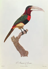 Azara Aracari, Barriere Alternate View