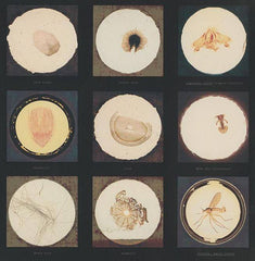 After microscope slides found in Freud's collection and a quotation from Jacques Lacan, Susan Hiller Alternate View