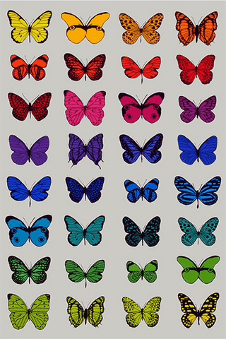 32 Butterflies, Scott Campbell