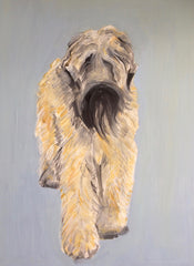 Wheaten Terrier, Sally Muir Alternate View