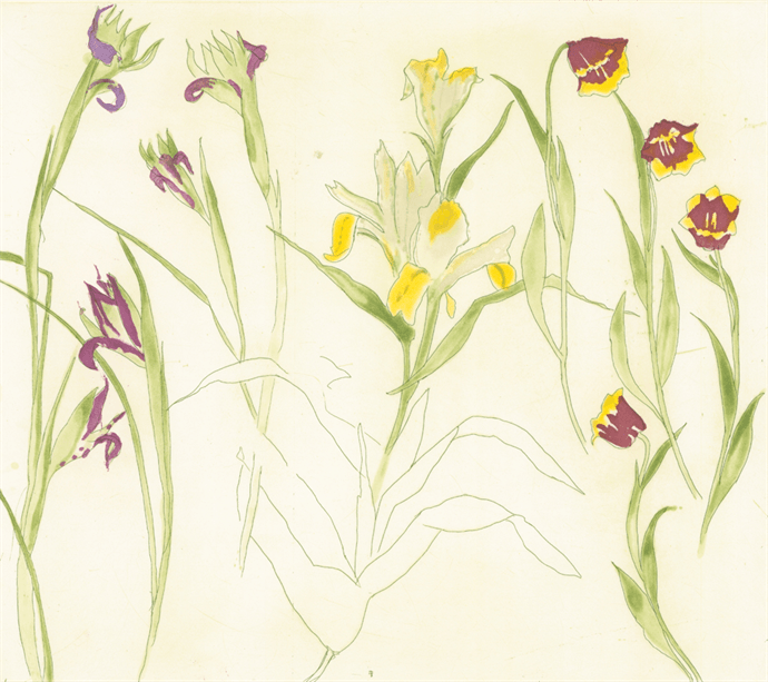 Irises. lillies. tulips, Elizabeth Blackadder - CultureLabel - 1