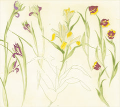 Irises. lillies. tulips, Elizabeth Blackadder