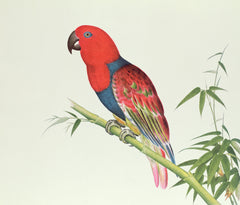 Electus Parrot on a Bamboo Shoot, Chinese School, Qing Dynasty (1644-1912) Alternate View