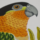 Black Headed Parrot, Fanny Shorter - CultureLabel