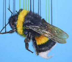 Bombus Terrestris, Louise McNaught Alternate View