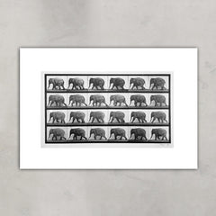 Elephant walking from 'Animal Locomotion', Eadweard Muybridge Alternate View