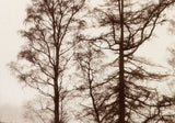 Misty Trees, Bob Marshall - CultureLabel - 2