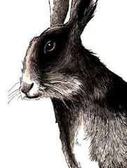 Wise Old Hare, Jimbobart Alternate View