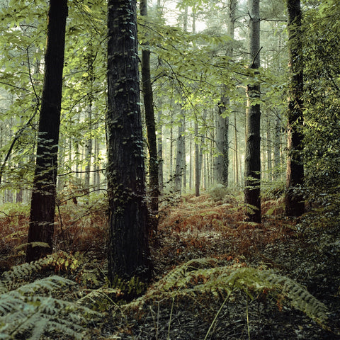 Deep Forest, Tim Hall