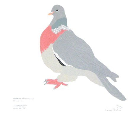 Wood-Pigeon Screen Print, Fanny Shorter - CultureLabel
